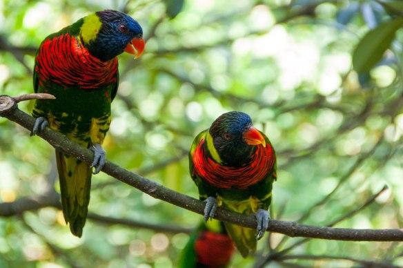 Bird Park (10 von 17)