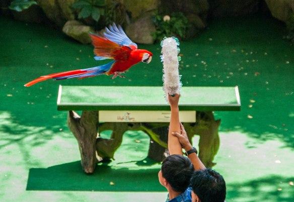 Bird Park (13 von 17)