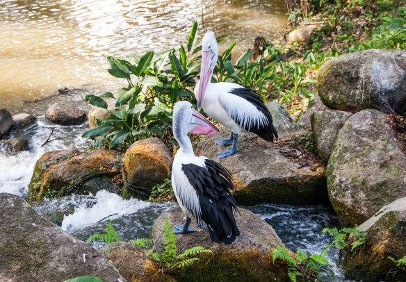 Bird Park (14 von 17)