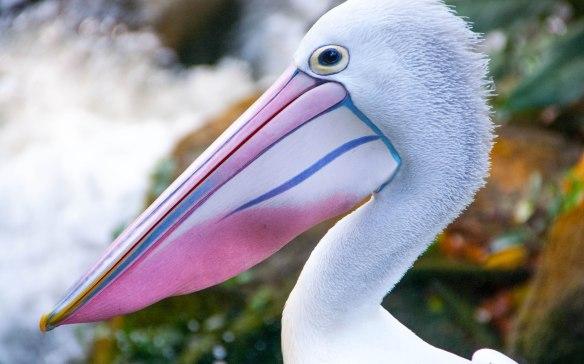 Bird Park (15 von 17)