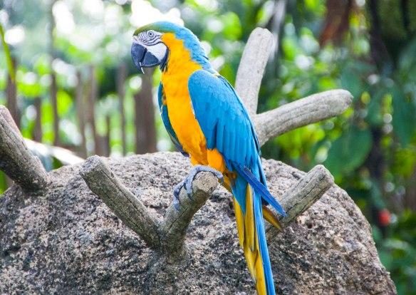 Bird Park (16 von 17)