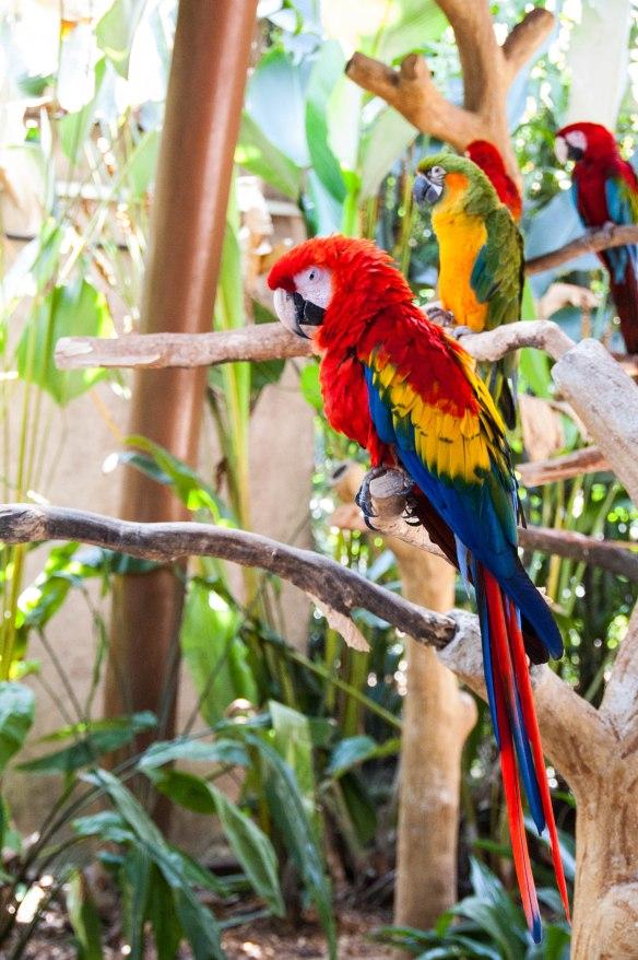 Bird Park (3 von 17)