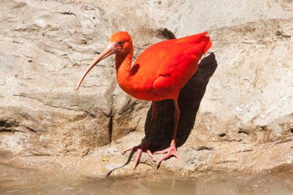 Bird Park (4 von 17)