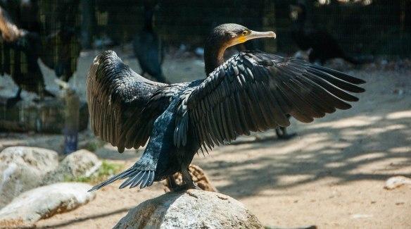 Bird Park (5 von 17)
