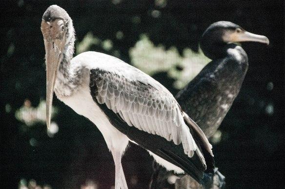 Bird Park (6 von 17)