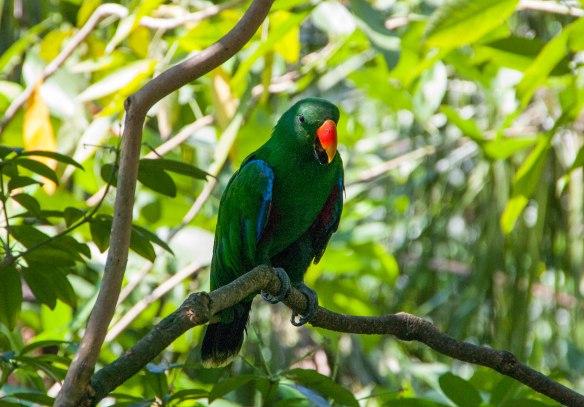 Bird Park (9 von 17)