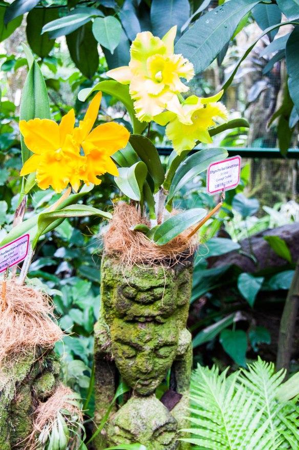 Botanic Garden (11 von 17)