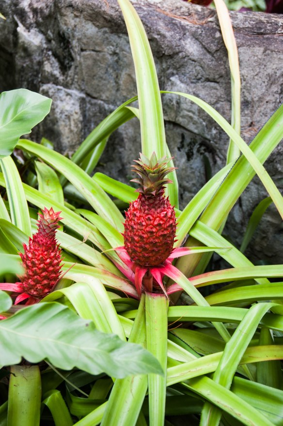 Botanic Garden (12 von 17)