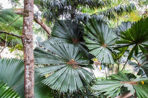 Botanic Garden (13 von 17)