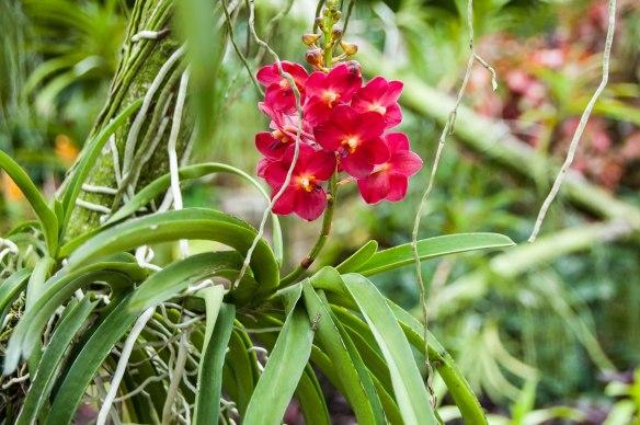 Botanic Garden (14 von 17)