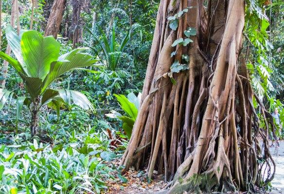 Botanic Garden (3 von 17)