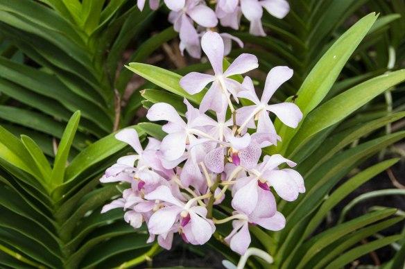 Botanic Garden (7 von 17)