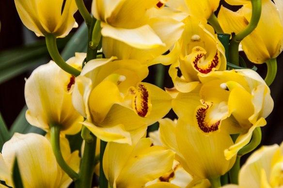 Botanic Garden (9 von 17)