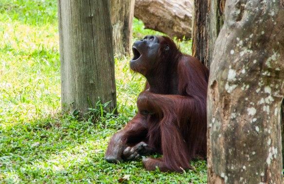 Singapore Zoo (14 von 32)