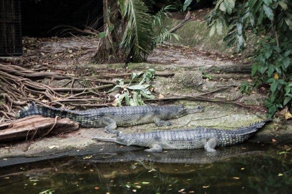 Singapore Zoo (16 von 32)