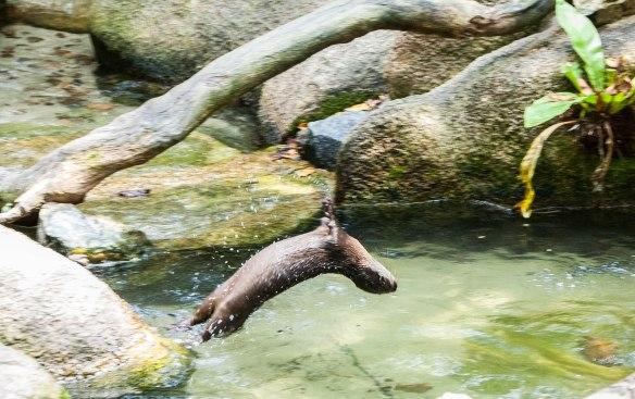 Singapore Zoo (2 von 32)