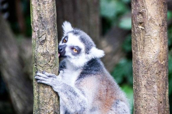 Singapore Zoo (24 von 32)
