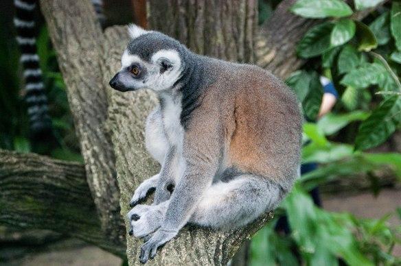Singapore Zoo (25 von 32)