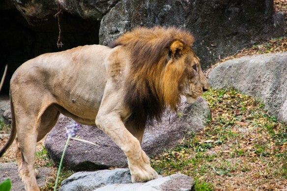 Singapore Zoo (27 von 32)