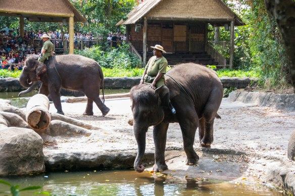 Singapore Zoo (3 von 32)