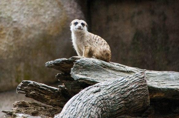 Singapore Zoo (31 von 32)