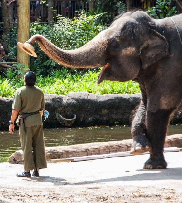 Singapore Zoo (4 von 32)