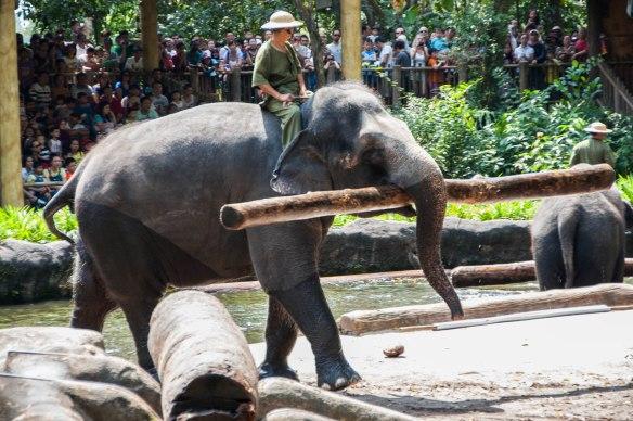 Singapore Zoo (5 von 32)