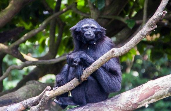 Singapore Zoo (8 von 32)