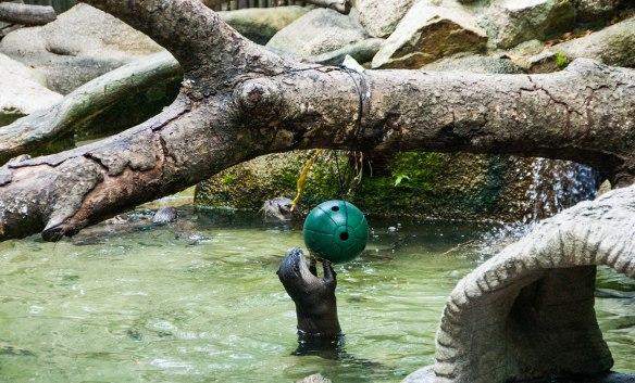 Singapore Zoo (9 von 32)