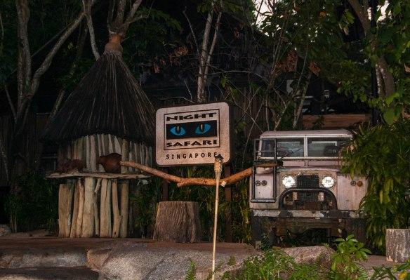 Night Safari (1 von 11)