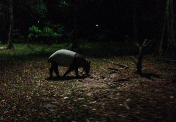 Night Safari (10 von 11)