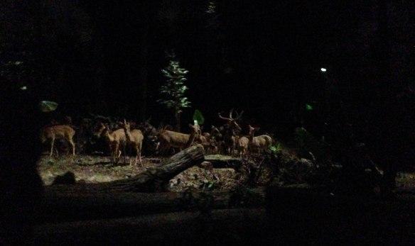 Night Safari (11 von 11)