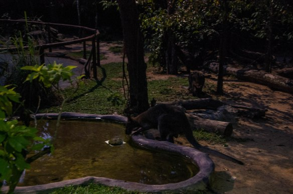 Night Safari (2 von 11)