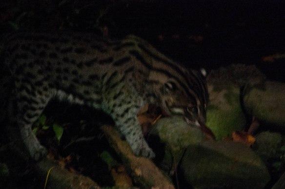 Night Safari (7 von 11)