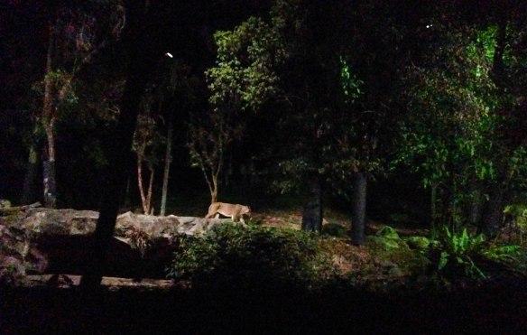 Night Safari (9 von 11)