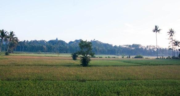Borobudur-Prambanan (17 von 32)